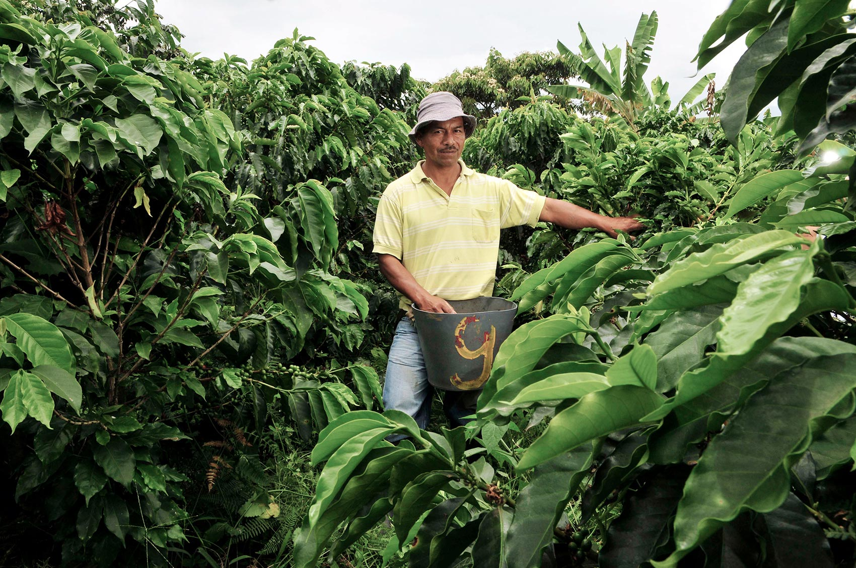 Kaffeebauer bei der Ernte