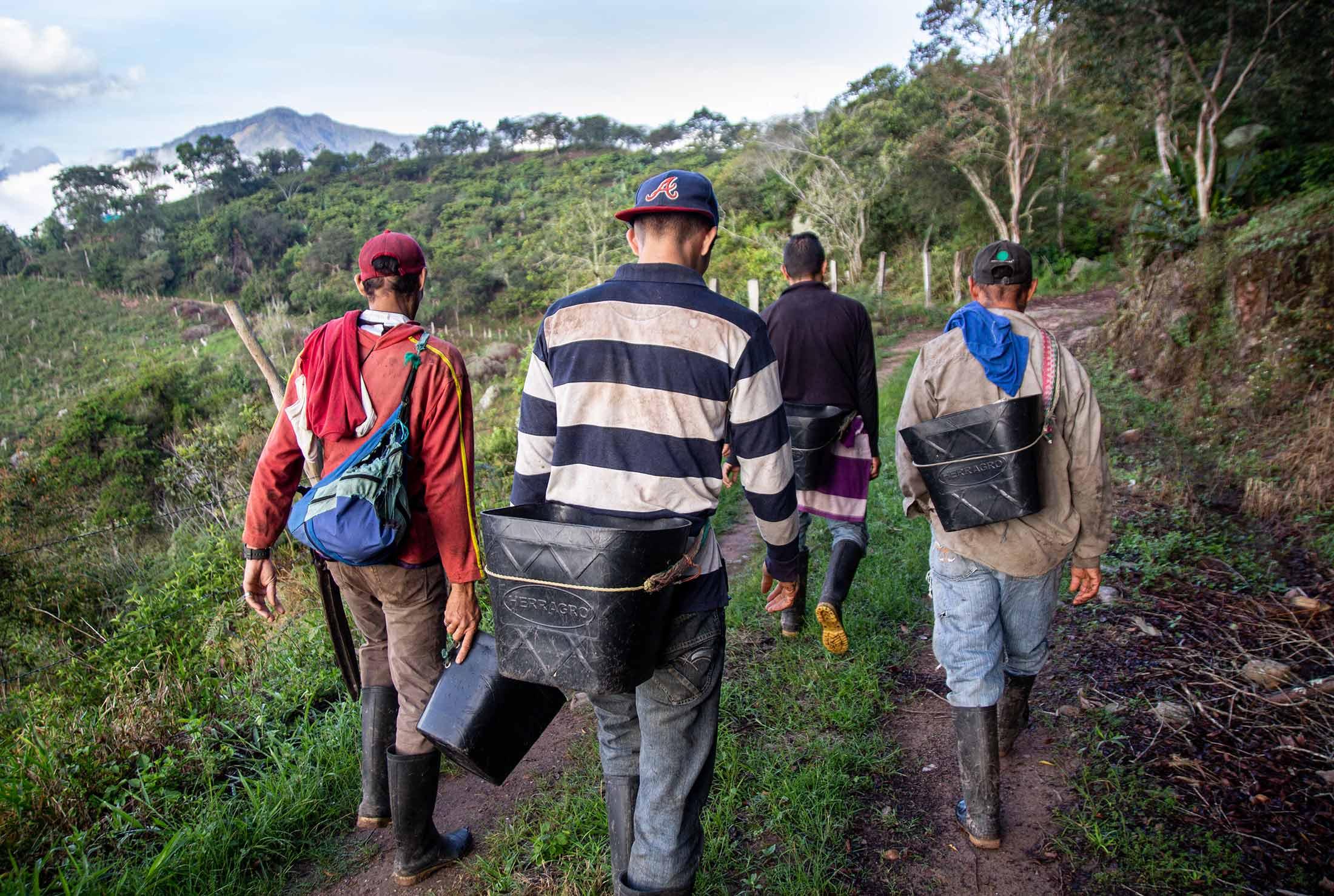 Die Erntehelfer auf dem Weg zur Arbeit: Die Kaffeefelder