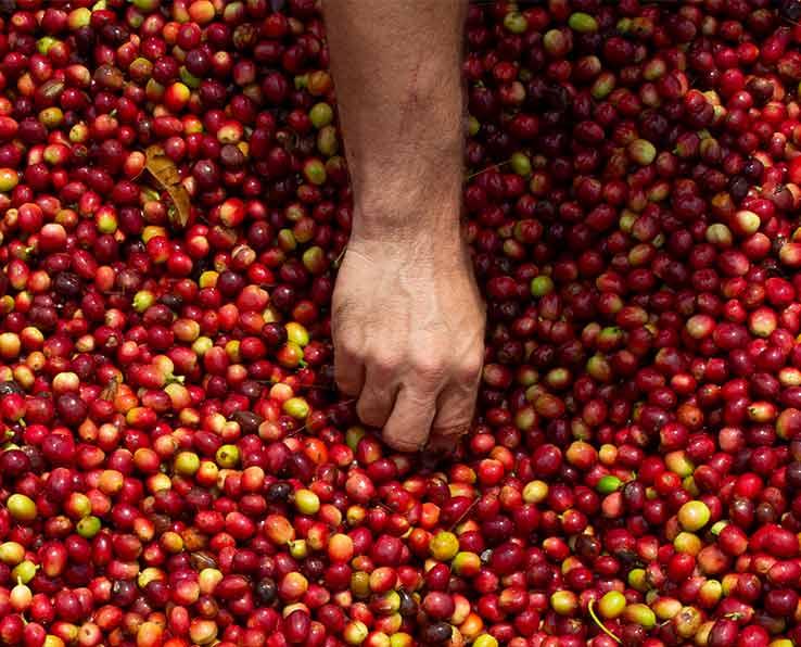 Glossar – unser Kaffee-Wiki