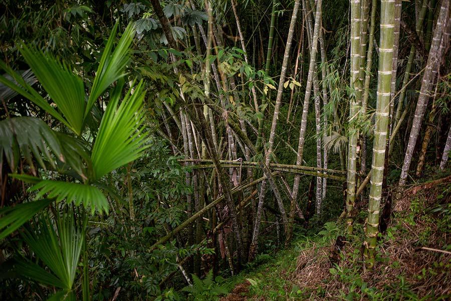 Im Guadual, der auf Eduardos Finca wächst.