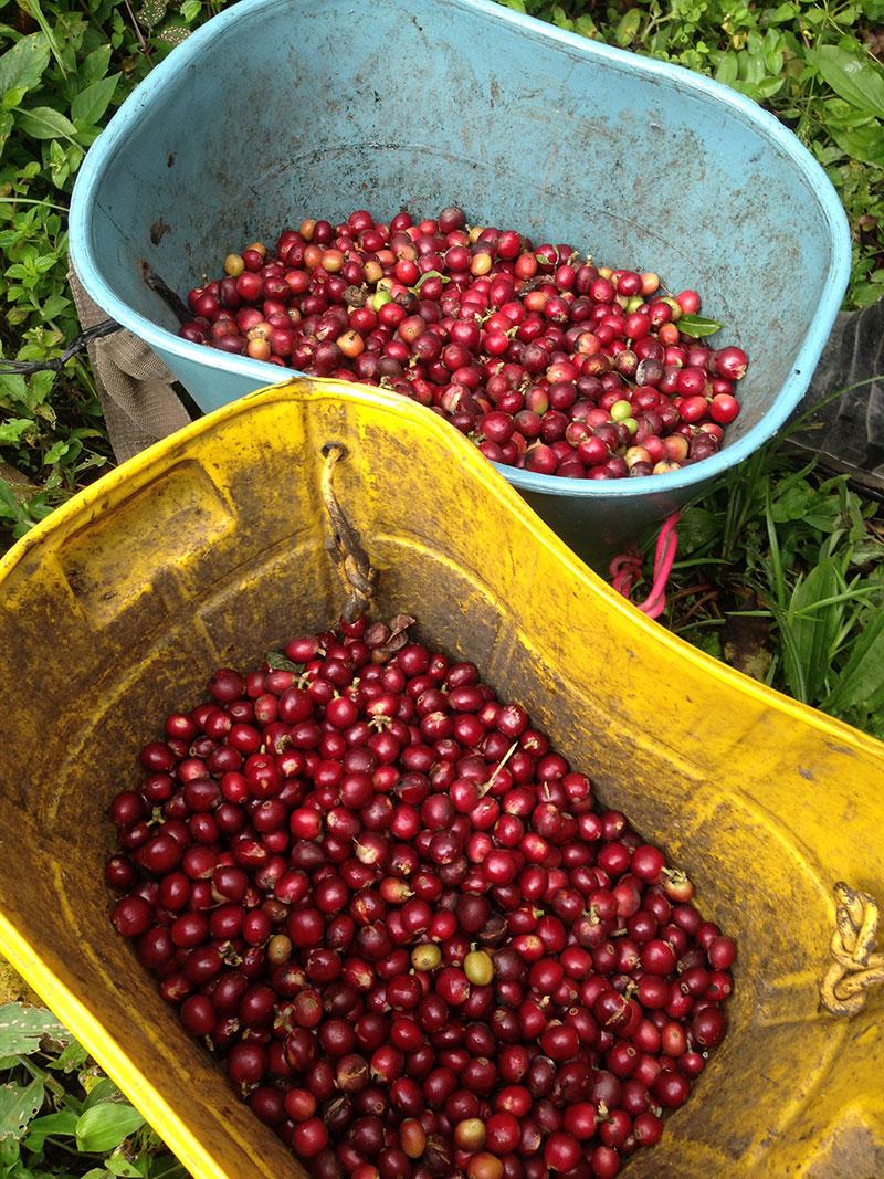 Kolumbien Reisebericht Kaffeereise. CafCaf.de – Kaffee & Blog, Kaffeeblog