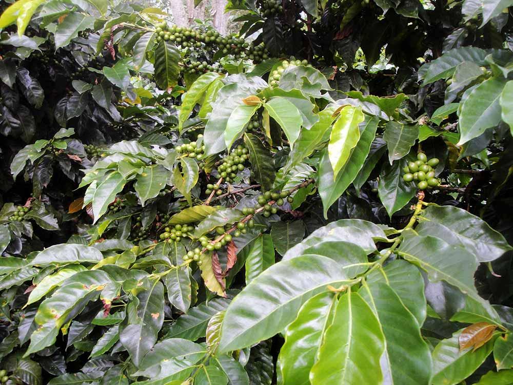 Kolumbienreise Kaffee, Reisebericht. CafCaf.de – Kaffee & Blog, Kaffeeblog