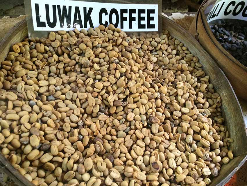 Kopi Luwak. CafCaf.de – Kaffee & Blog, Kaffeeblog