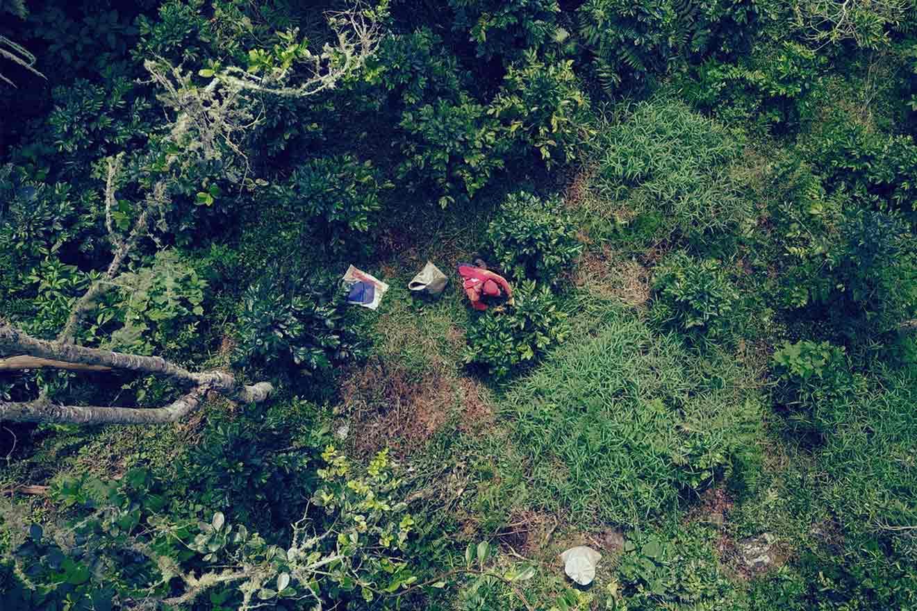 CafCaf Exklusiv: Probiert den einzigartigen Wald-Kaffee