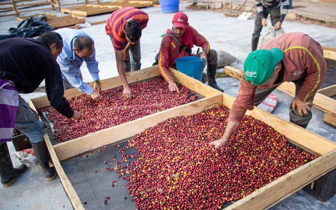 Unsichtbar und verwundbar: Erntehelfer auf Kaffeefarmen
