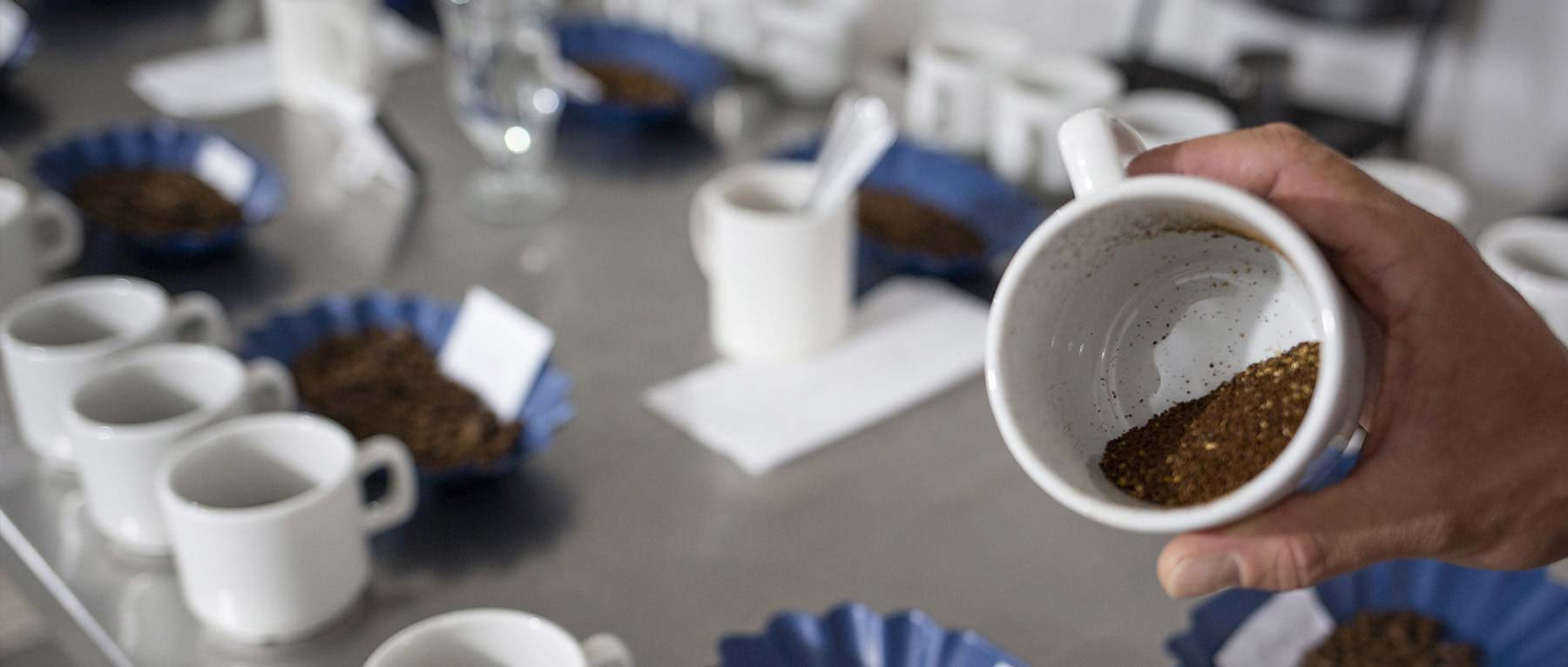 ACE - Alliance for Coffee Excellence. CafCaf.de – Kaffee & Blog, Kaffeeblog