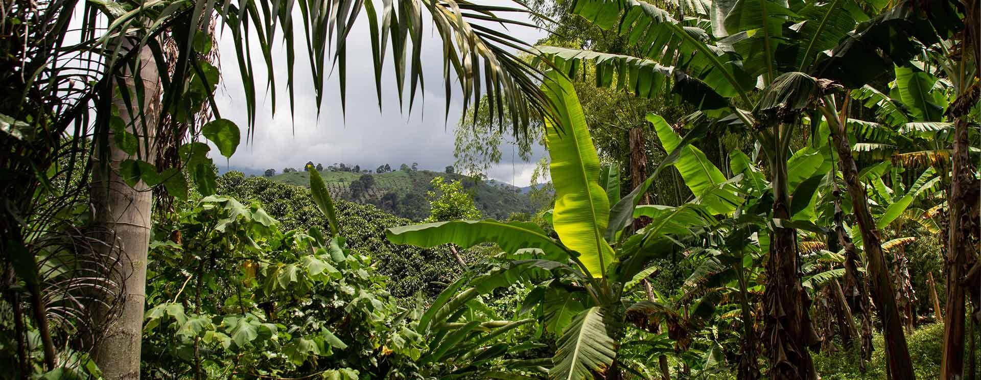 Umweltschutz und Natur bei CafCaf