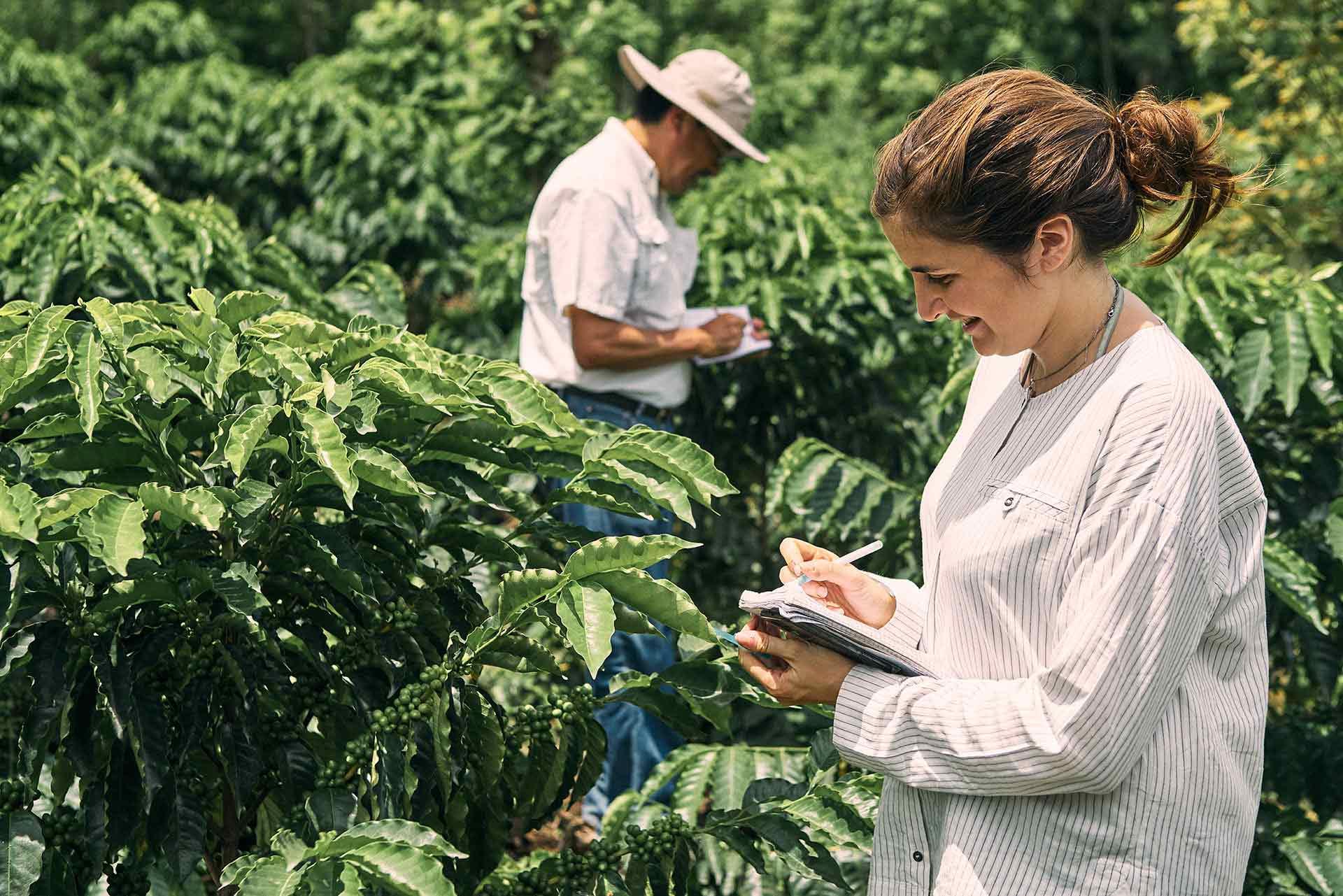 WCR, World Coffee Research Interview: CafCaf Stories. CafCaf – Kaffee & Blog, Kaffeeblog
