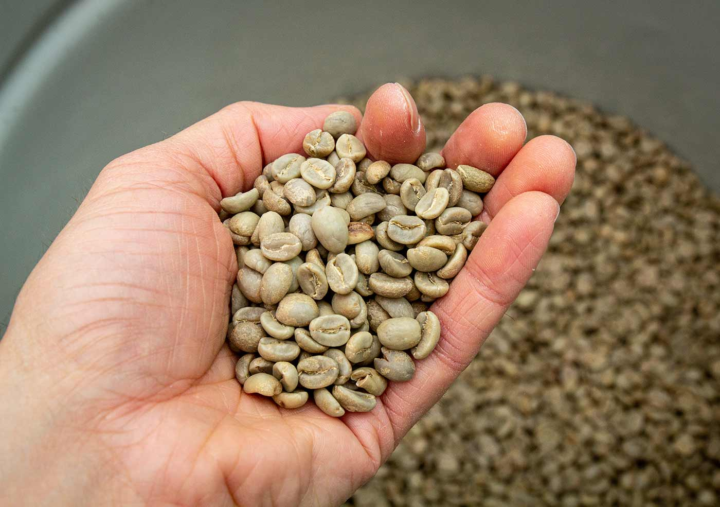 Frischer, grüner Kaffee vor dem Rösten