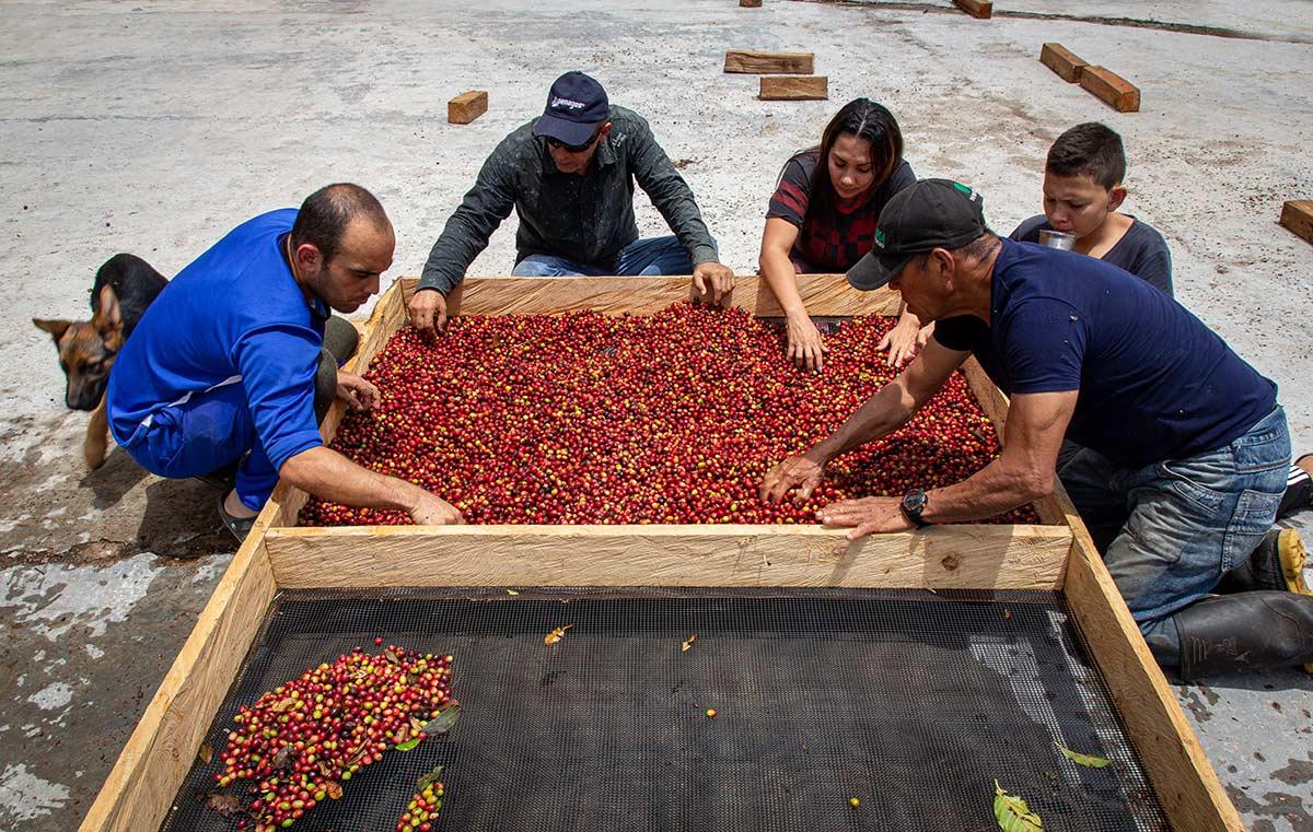 Hochland Kaffee aus den kolumbianischen Bergen: Miguel Angel's Kaffee