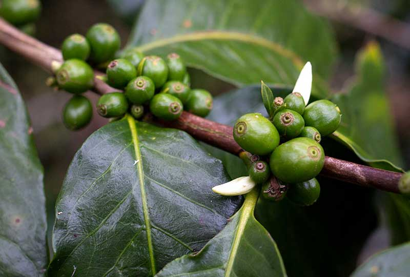 Kaffee und Umwelt