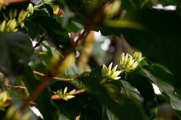 Umwelt-, Natur- und Klimaschutz beim Kaffeeanbau