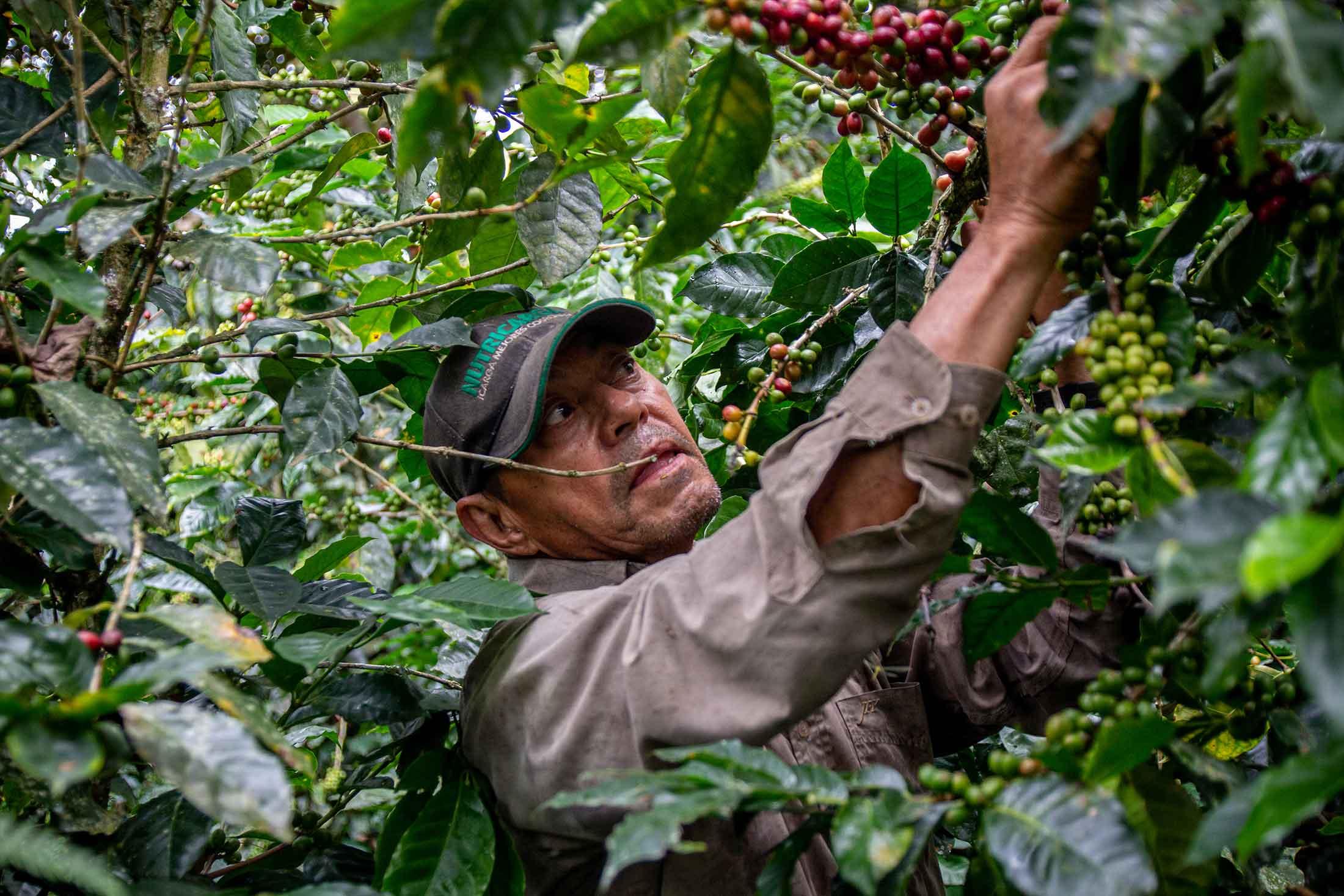 Henry bei der Arbeit auf Miguel Ángels Farm.