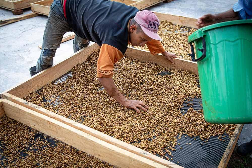 Auf dem Weg zum Kaffee-Ernten...