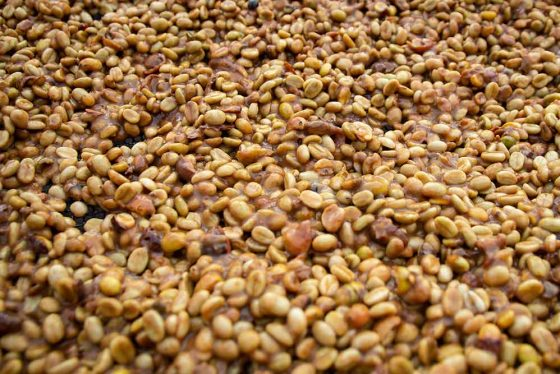 Honey Fermented, bzw. honig-fermentierter Kaffee