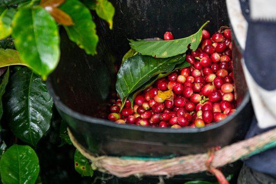 Entkoffeinierter Kaffee
