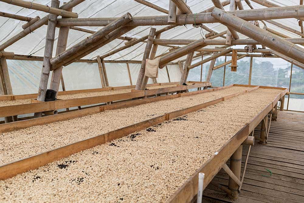 Trockenflächen für den gewaschen fermentierten Kaffee