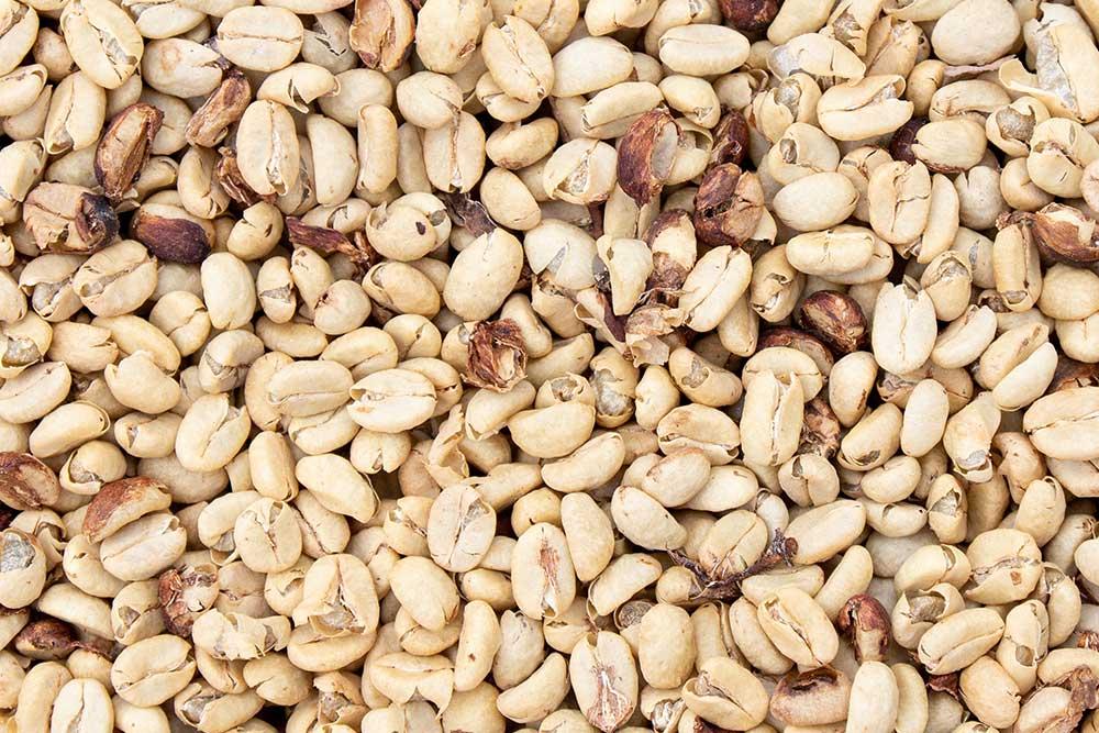 Getrockneter washed-fermentierter Kaffee