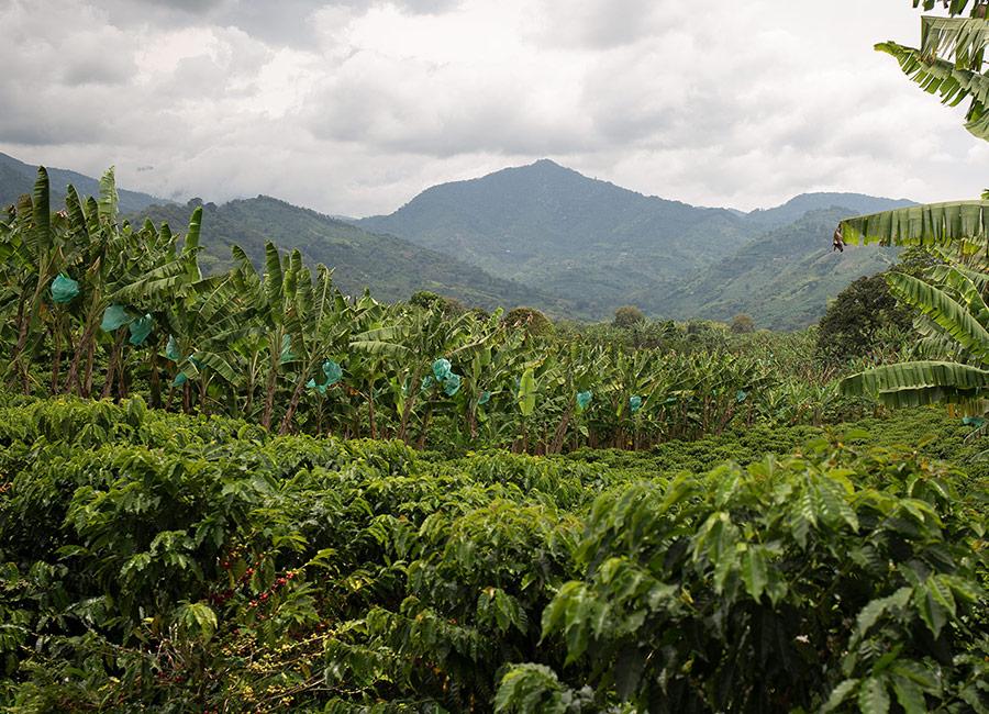 https://www.cafcaf.de/wp-content/uploads/CafCaf_Kaffeeblog-Kolumbien-Familienfarm.jpg