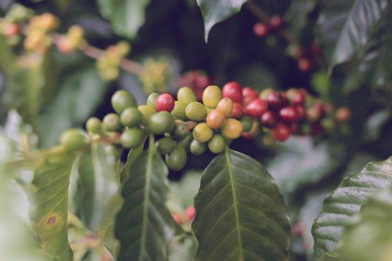 Trailer: Colombia – A coffee travel story