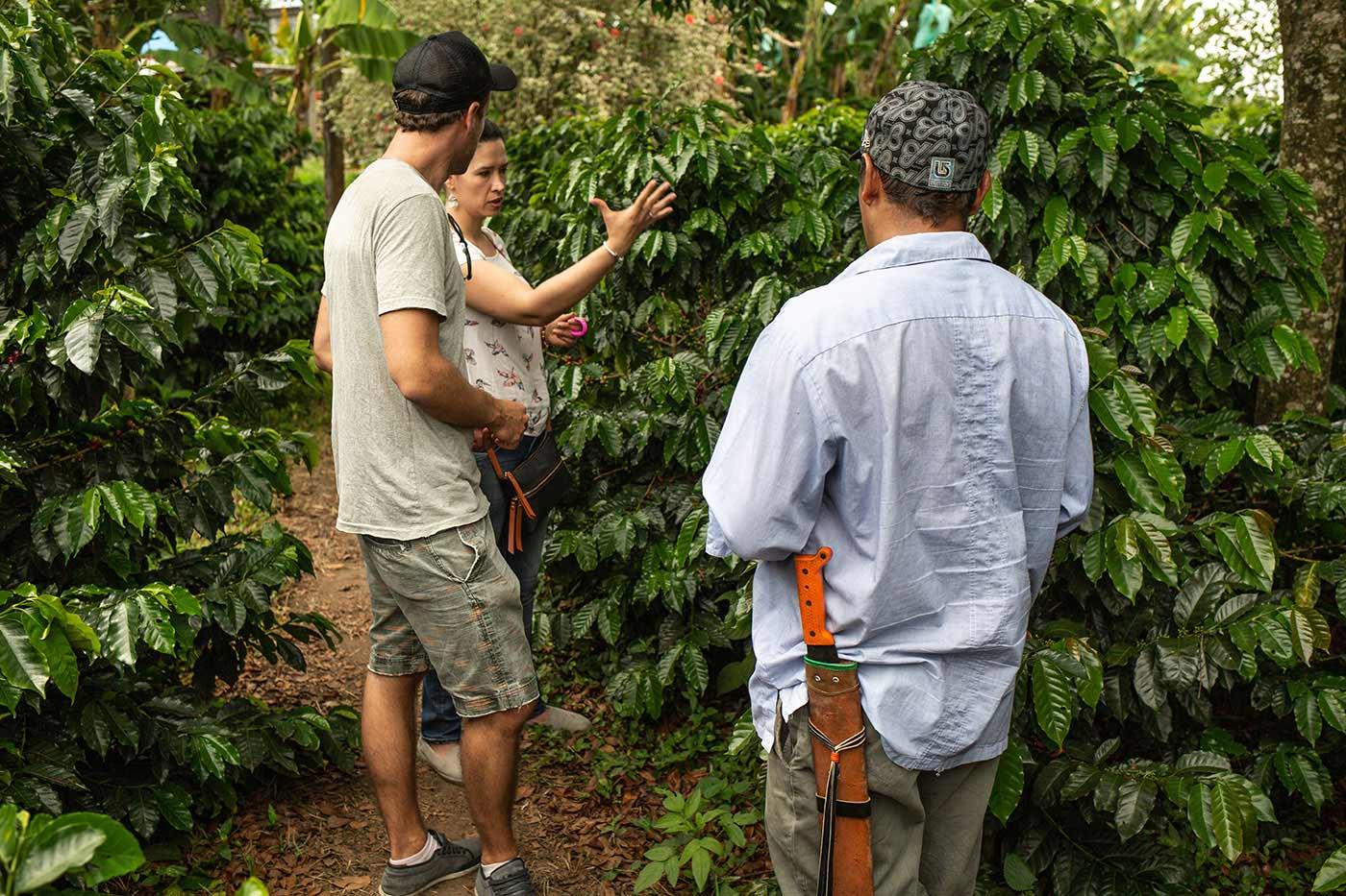 Aufforstung: Kaffee und Kakao. CafCaf.de – Kaffee & Blog, Kaffeeblog