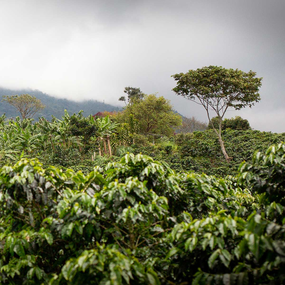 The Arhuaco, Colombia. CafCaf.de – Kaffee & Blog, Kaffeeblog