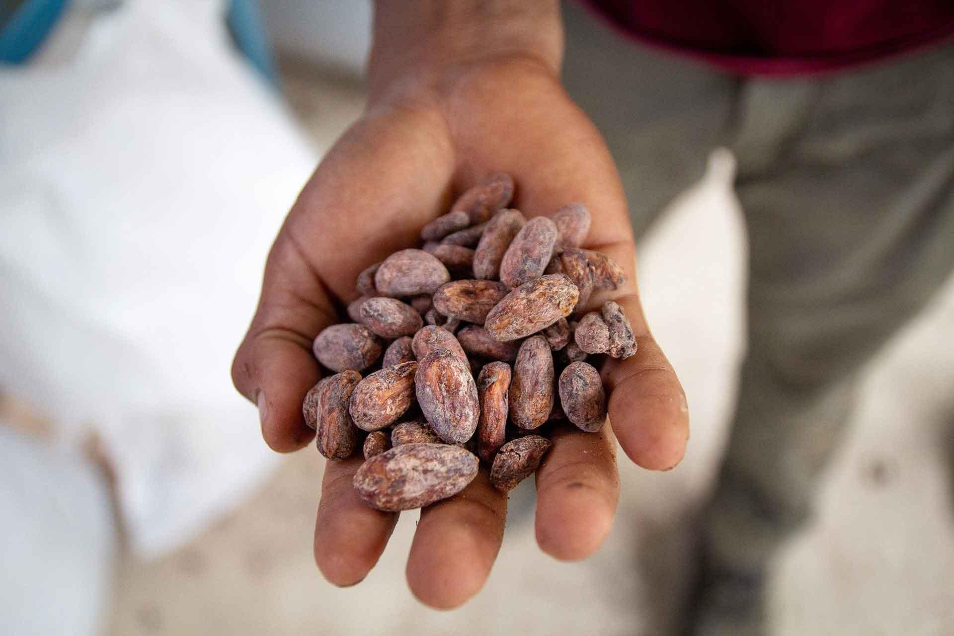 Kakao: Unterschiede und Ähnlichkeiten zwischen Kaffee und Kakao. CafCaf.de – Kaffee & Blog, Kaffeeblog