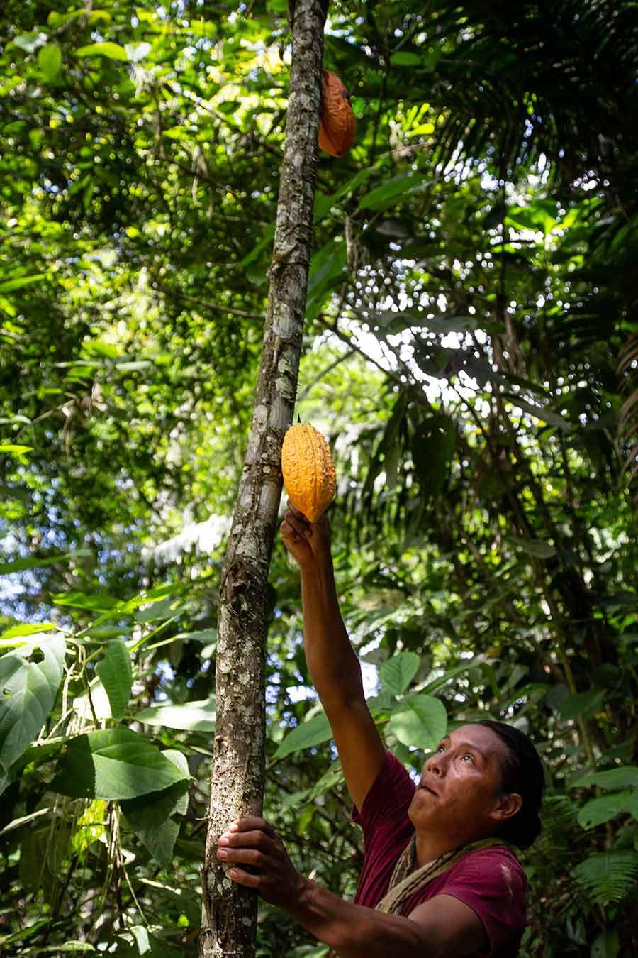 Cacao experts, Originalbeans Interview: CafCaf Stories. CafCaf – Kaffee & Blog, Kaffeeblog