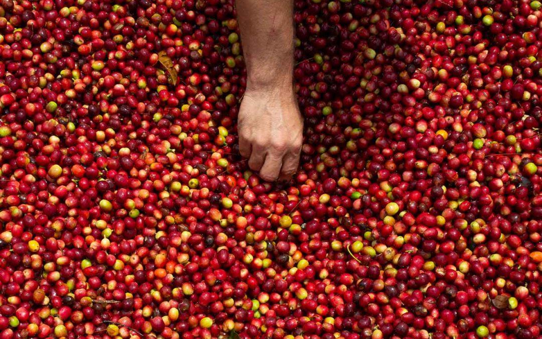 Zitroniger Kaffee – der Fruchtsaft der besonderen Art