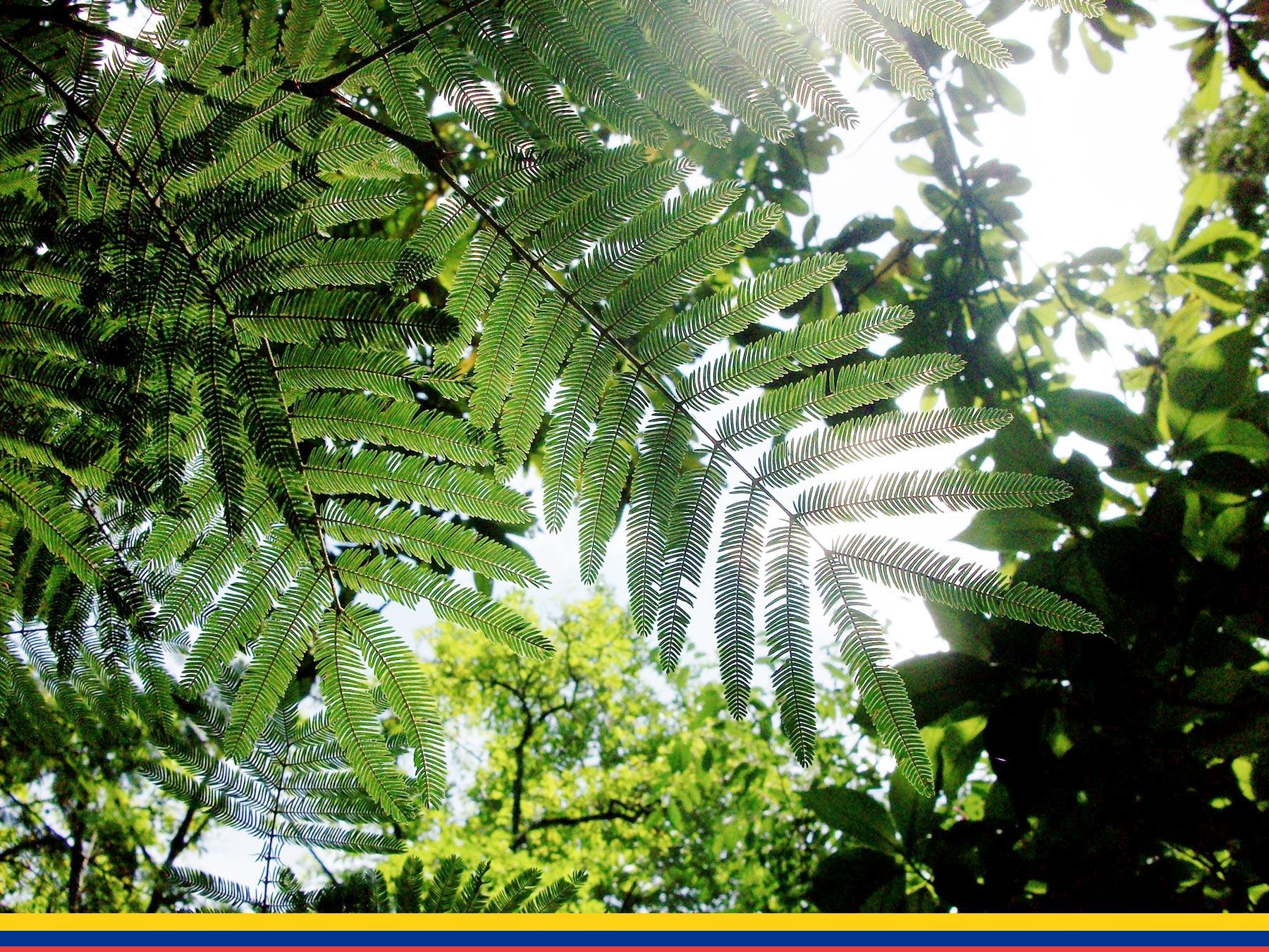 Kolumbien. CafCaf – Kaffee & Blog, Kaffeeblog